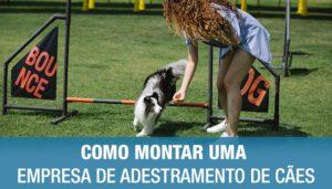 Como Montar uma Empresa de Adestramento de Cães